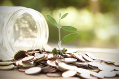 Saving. Pot with coins saving concept Stock Image