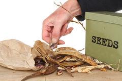 Saving seed Royalty Free Stock Photography