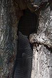 Saving a tree Stock Photography