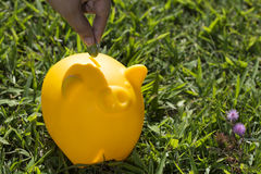 Savings in the green grass - Stock Image Stock Images