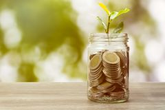 Savings and investment concept. Plant growing on coins in jar on table on green nature background stock image