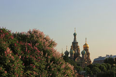 Savior on the Spilled Blood, St. Petersburg, Russi Stock Images
