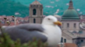 SAVONA ITALY - MAY 7 2017: Seagull bird sitting on the fort wall with a city centre on background. SAVONA ITALY - MAY 7 2017: Seagull sitting on the fort wall stock video