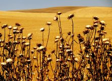 Savoring the desert Royalty Free Stock Images
