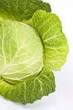 Savory Cabbage Stock Photography