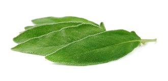 Savory leaves Royalty Free Stock Photo