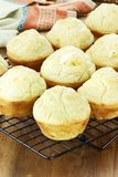 Savory Muffins Royalty Free Stock Images