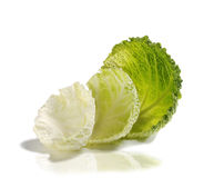 Savoy Cabbage. Green cabbage over white background Royalty Free Stock Photo