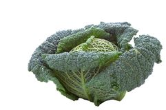 Savoy Cabbage. A detailed image of a savoy cabbage Royalty Free Stock Images