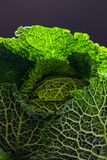 Savoy cabbage. Back lit against a black background Royalty Free Stock Photography