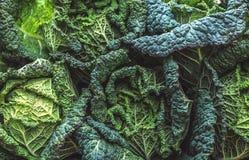 Savoy cabbage background Royalty Free Stock Image