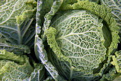 Savoy cabbage close up Stock Image