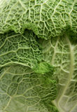 Savoy cabbage close-up. Savoy cabbage vegetable leaf close-up Royalty Free Stock Photography