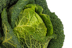 Savoy Cabbage closeup Stock Photo
