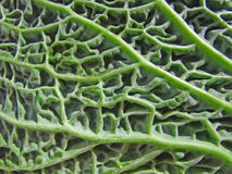 Savoy cabbage detail Royalty Free Stock Images