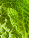 Savoy Cabbage Detail Royalty Free Stock Photography