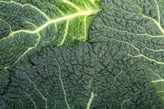 Savoy cabbage Stock Photo