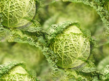 Savoy cabbage green crinkled leaves fresh produce market vegetables Royalty Free Stock Images
