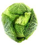Savoy cabbage head with water drops Royalty Free Stock Image