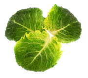 Savoy cabbage isolated Royalty Free Stock Image