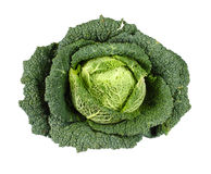 Savoy Cabbage isolated on white Royalty Free Stock Photography