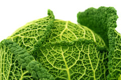 Savoy cabbage isolated Stock Images