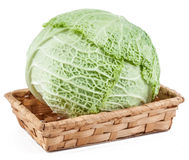 Savoy cabbage isolated. On white background Royalty Free Stock Photo