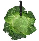 Savoy cabbage with a knife Royalty Free Stock Image