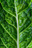 Savoy cabbage leaf Royalty Free Stock Photography