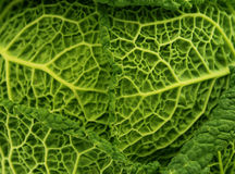 Savoy Cabbage Leaf As A Texture Royalty Free Stock Photography