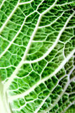 Savoy cabbage leaf Stock Photography