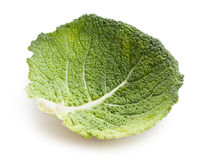 Savoy cabbage leaf Stock Image