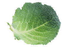 Savoy cabbage leaf on white Stock Images