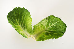 Savoy cabbage leaves. Shot of savoy cabbage leaves Royalty Free Stock Images
