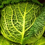Savoy cabbage leaves texture