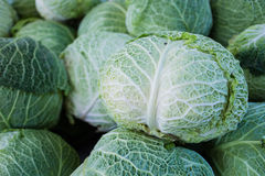 Savoy cabbage at market Stock Image