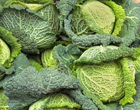 Savoy cabbage pile Stock Image