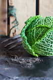 Savoy cabbage, soil, garden fork, row marker against fence background Stock Images