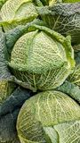 Savoy cabbage in the supermarket Stock Image