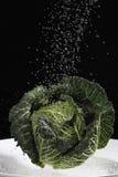 Savoy cabbage under jet of water Stock Photo
