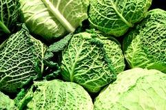 Savoy cabbage,biological, vegetable, food, ingredient,organic. Group of savoy cabbage fresh Royalty Free Stock Photos
