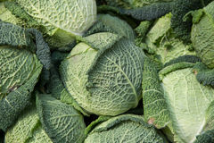 Savoy cabbage - Verza. On a market Stock Photography