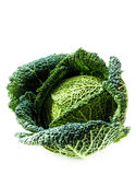 Savoy cabbage on the white background Royalty Free Stock Image