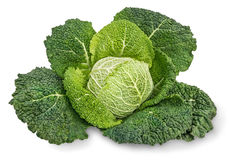 Savoy cabbage. On white background. Isolated Stock Image