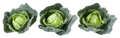 Savoy cabbages. Three savoy cabbages isolated on a white background Royalty Free Stock Photos