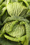 Savoy cabbages Stock Images