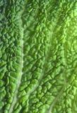 Savoy leaf Royalty Free Stock Photography