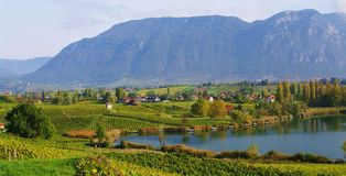 Savoyard vineyard Stock Photography
