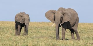 Savuti Marsh Africa Stockbild