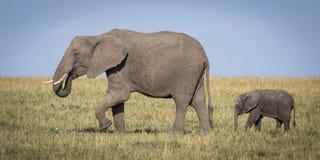 Savuti Marsh Africa Stockfotos